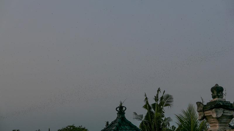 27920282050 720d7dd8e5 c - REVIEW - Villa Bulung Daya, Tabanan (Bali)