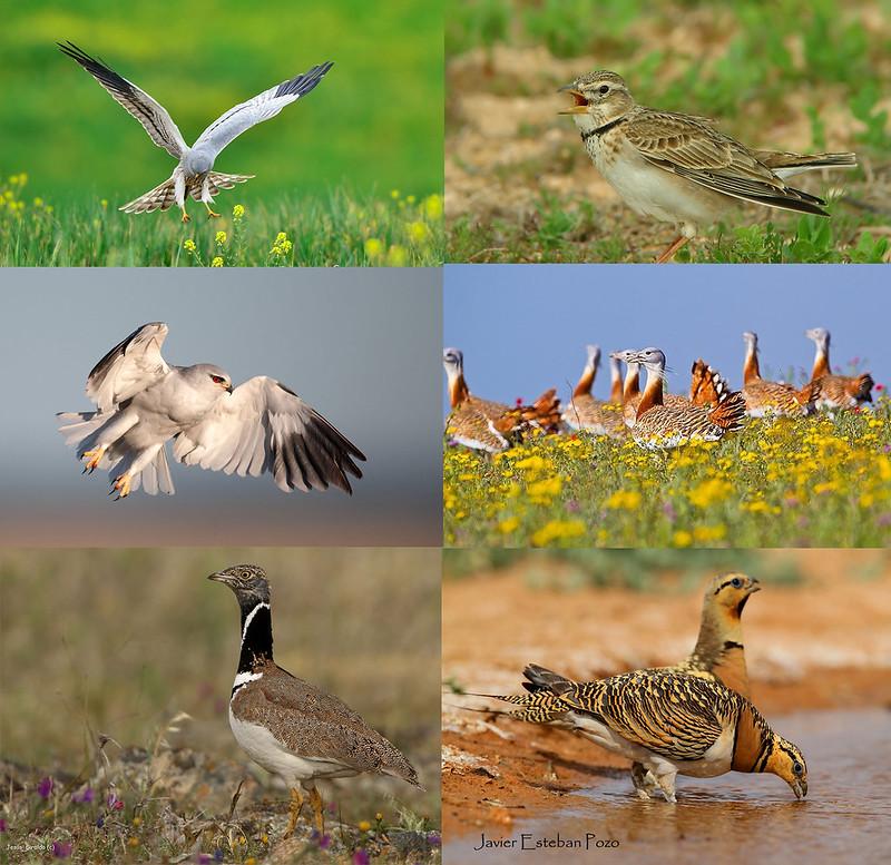 aves Valle del Guadiato
