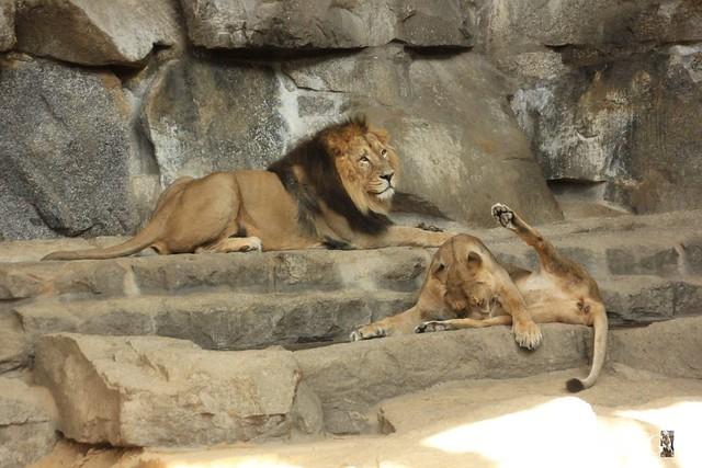 Besuch Tierpark Friedrichsfelde 07.08.16108