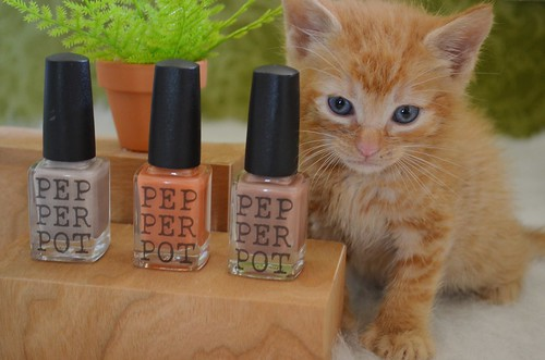 A Little Something to Make Your Paws Pretty!