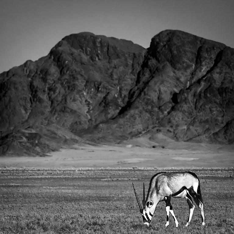 FA05 FA38 mpereda (Namibia) - Oryx - Tomada en Namib-naukluft national park el 08062015