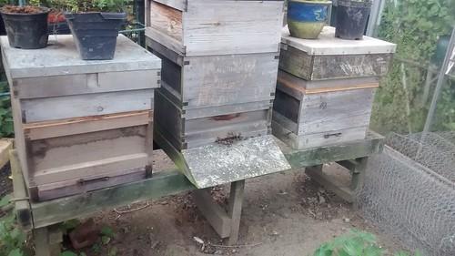 hives July 16