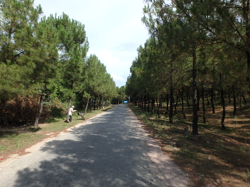 road-pine-forestation