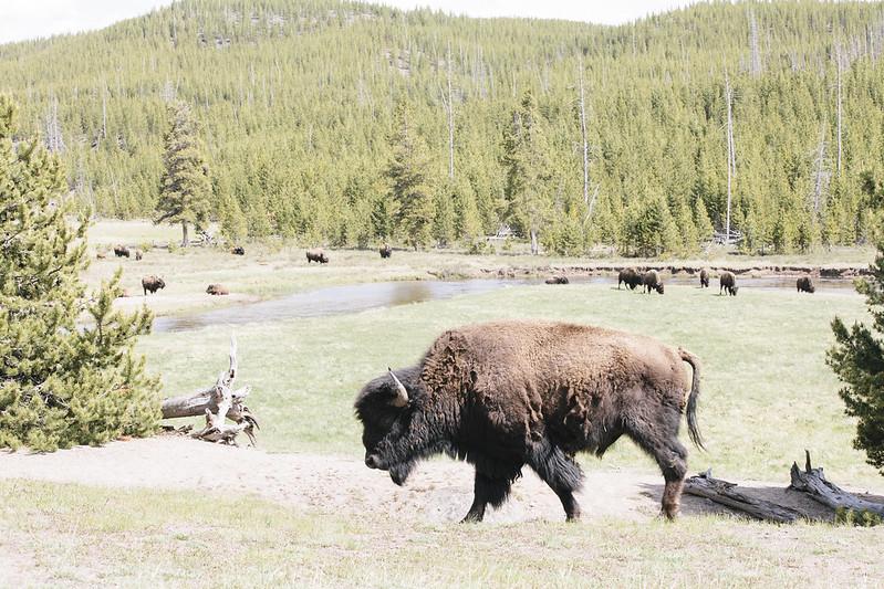 Montana_May16_101