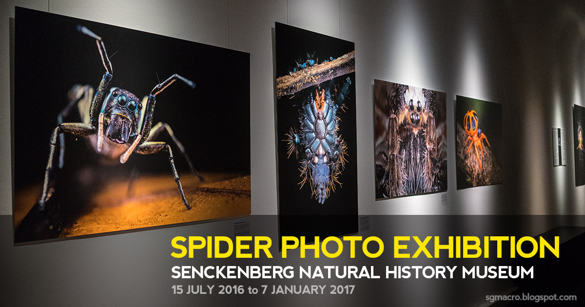 Spider Photo Exhibition at Senckenberg Natural History Museum