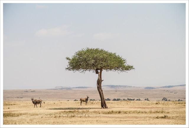 MasaiMara-136