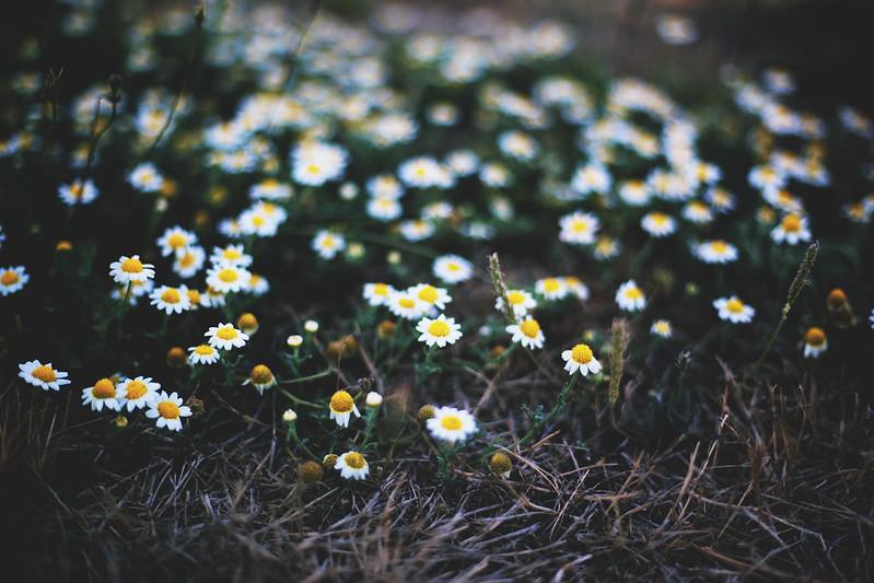 verão são flores na cabeça