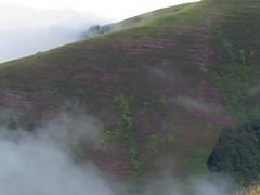 Ladera oeste del Saioa lleno de brezo