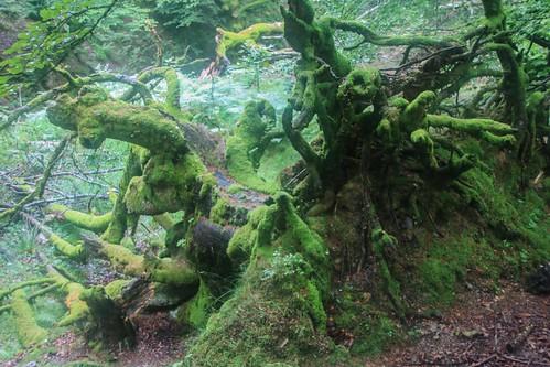 Parque Natural de #Gorbeia #DePaseoConLarri #Flickr - -879