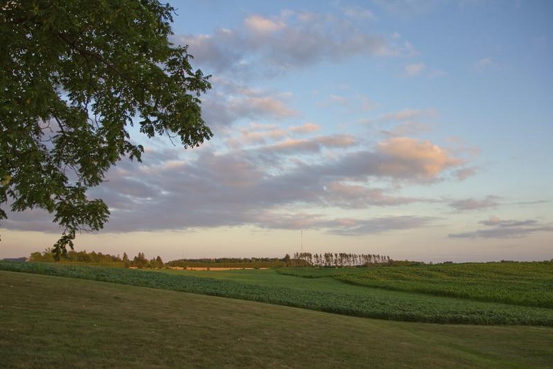 field at dusk2