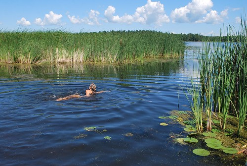 Swimming in the marsh