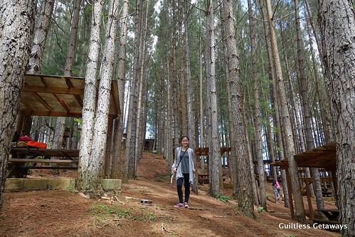 dahilayan-forest-park.jpg