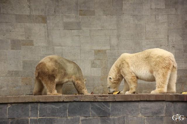 Zoo Rostock 2. Teil 20.08.201698