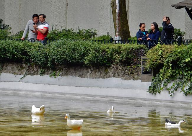 park-ducks