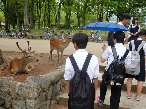 jp16-Nara-j1-Todaiji (2)