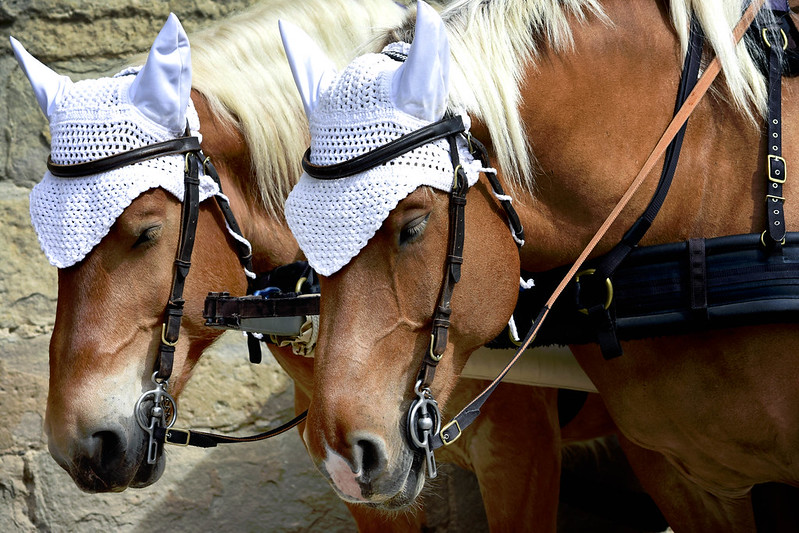 Carcassone Castle Tour Horses.jpg