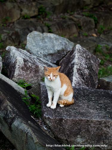 Cat #02