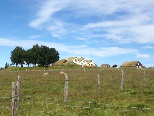 Iceland 2016 - farm