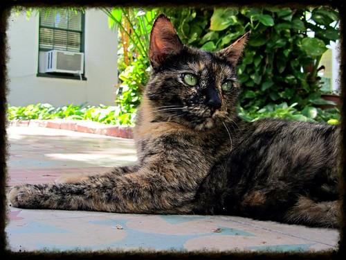 Hemingway cat 4