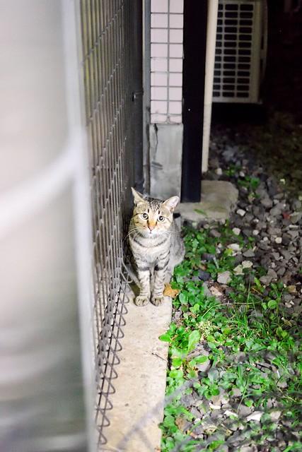ネコ_夜_撮影
