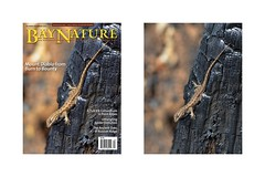 BN Lizard Cover 1 Photo Collage for Flickr